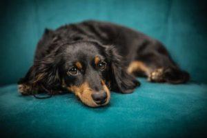 我が家の犬が脱走して探し回った結果、見つかったが・・・犬が欲しい人が飼い主は他に居ると言い出した!