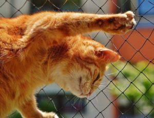 ウト他界後「寂しいから」という理由で捨て猫を拾いまくるトメ