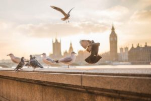 ていうか、鳩も賢い。そのハミングババアが来ると、餌をくれるとわかっているのであろう。そのババアに鳩が一斉に集まるのだ。