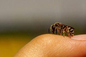 息子が大の虫好きで、自由研究と題して、地蜘蛛を1ヶ月間飼うという変な研究を始めた。