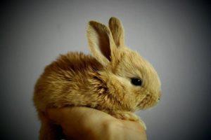 小さな居酒屋で、常連の婆さんがウサギを放し飼いにしていて・・・